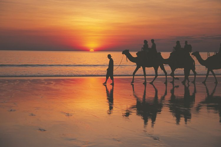 Camels on Cable Beach Broome at Sunset
